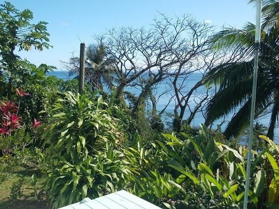 The garden in Fiji. We may not own it but we do take care of it, as do the mammoth fruit bats who nosh on the garden papaya each night.