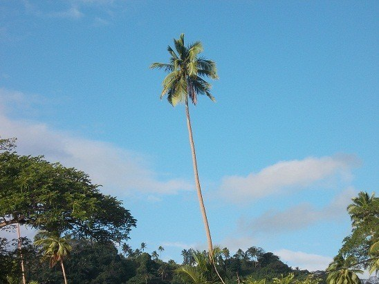 You can't stand alone - like this coconut tree in Savusavu - and expect to sell your eBook.
