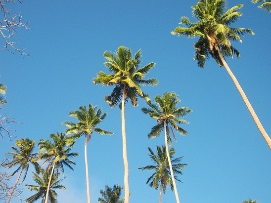 We have plenty of coconut trees in Savusavu. Plenty of blue skies too.