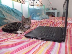 Do I HAVE TO promote my eBook? I don't feel like it....says Peggie Sue the Fijian wunder kitten.
