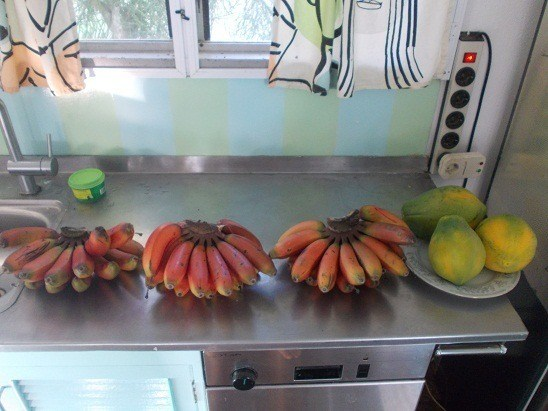 This week's dessert, all picked from the front and back yard. Red bananas are about the sweetest I've tasted, and Fijian papaya rocks.