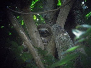 Throwback Photo. A baby sloth in Manuel Antonio, Costa Rica. From June 2013. Cutey.