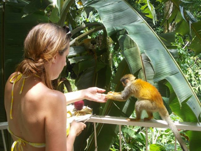 4 Things To Do In Quepos Costa Rica