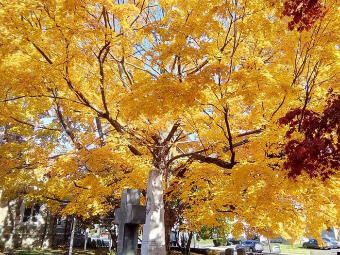 Eye-popping Autumn foliage in Norwalk, Connecticut. This spot sits across the street from one of our house sits.