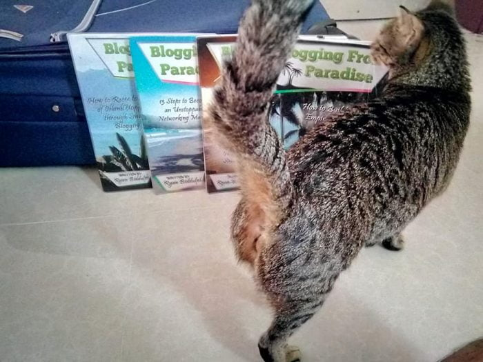 Cat butts and eBooks on Selz and Amazon. Ryan and Nora in Oman.